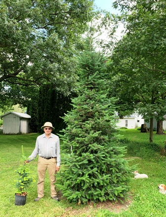 Canaan Fir from 3 ft potted to 12 ft tall in 6 years.