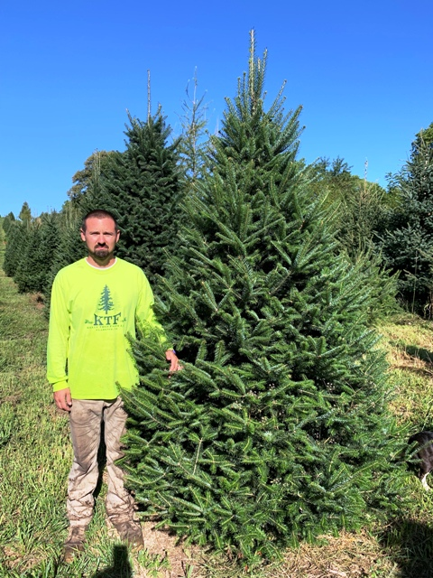 Canaan fir lightly trimmed for use as a windbreak or X-mas tree.