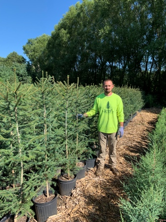 Potted 4+ ft size Norway Spruce. Perfect for getting that new windbreak started. We grow them so they are not too thick so they will not blow over the first year after planting.