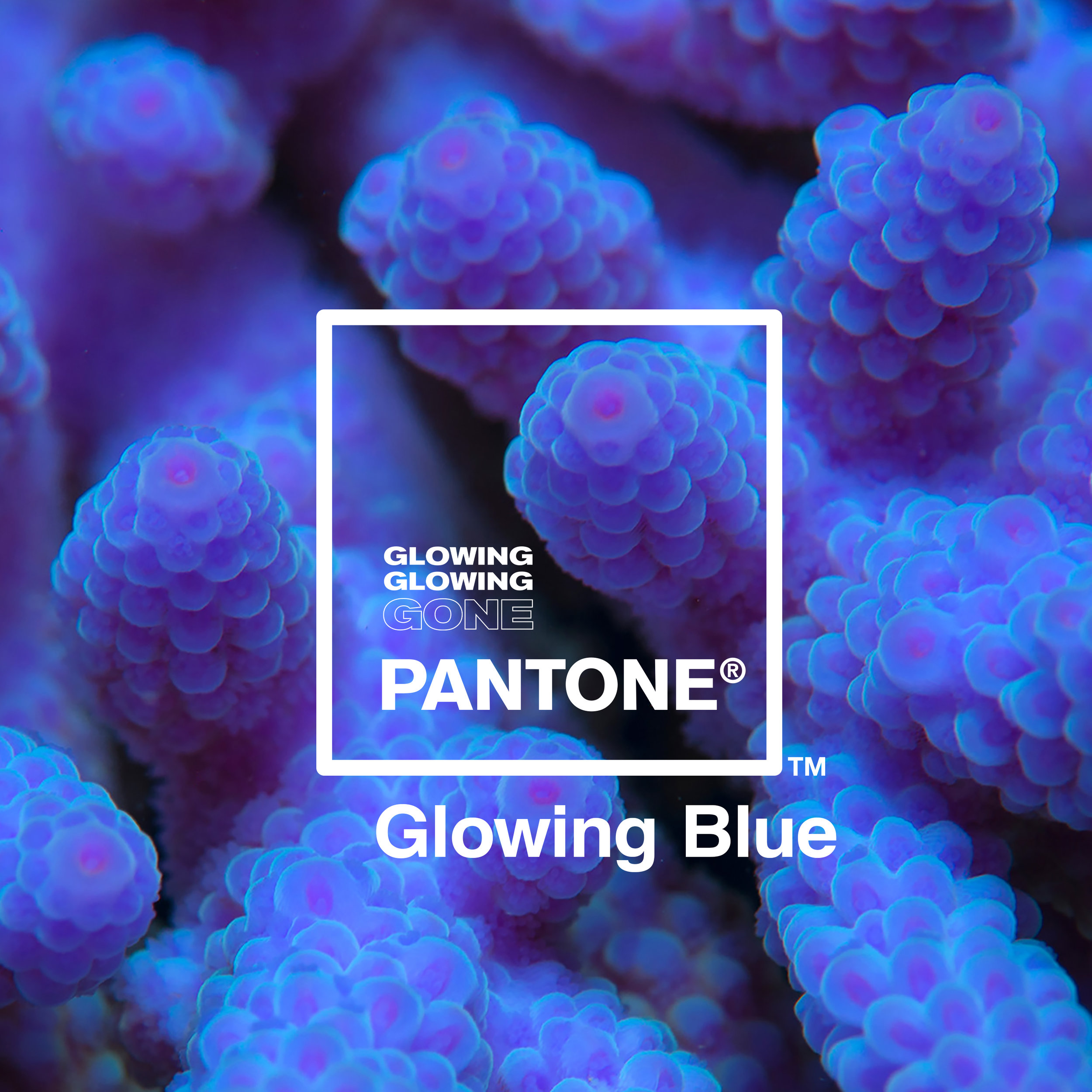 05 Glowing Blue.jpg