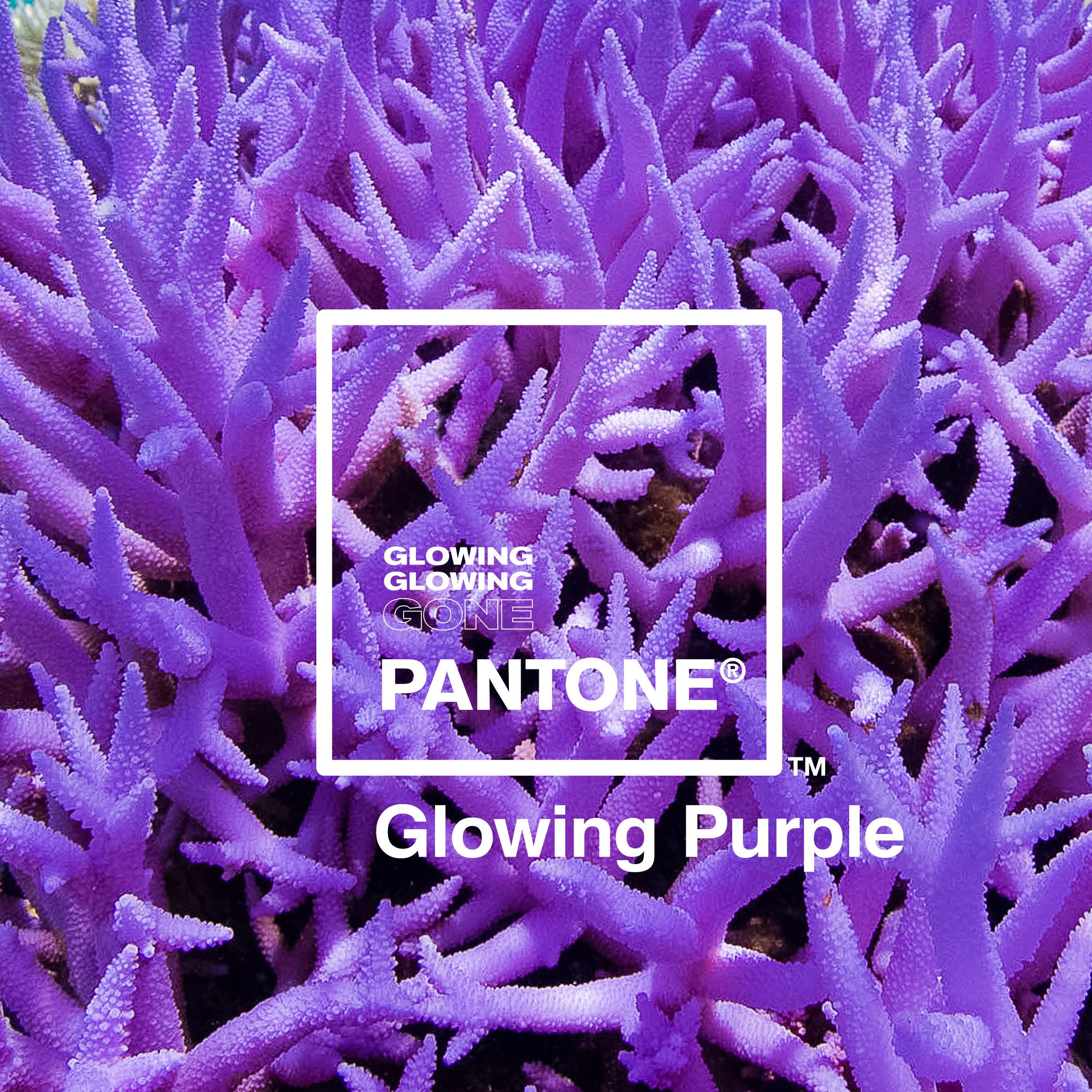 06 Glowing Purple.jpg