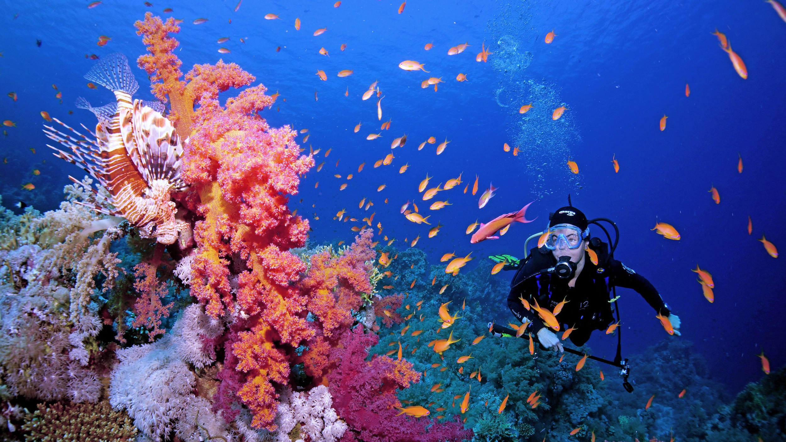 A thriving coral reef in the Red Sea.  Photo by Cinzia Osele Bismarck / Coral Reef Image Bank