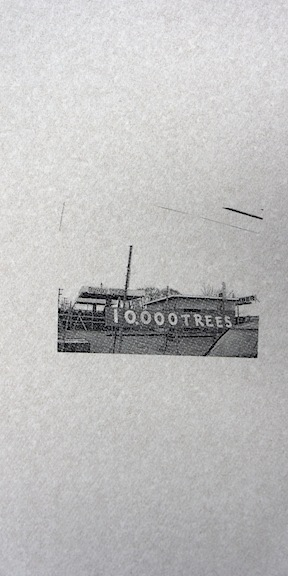 10,000 Trees.