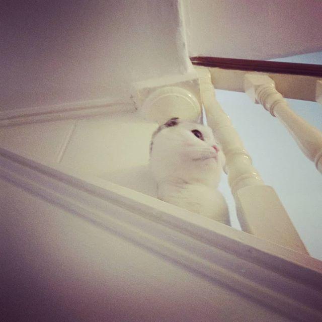 Early morning hide and seek  #kitten #toocute #london #fun #kitty #cat