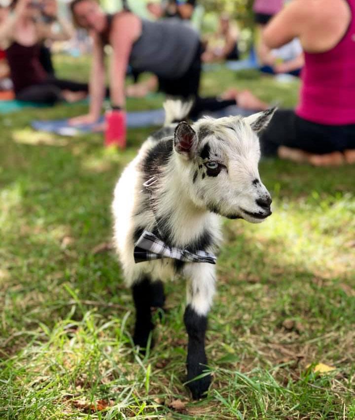 Beth_Wolfe_Goat_Yoga.jpg