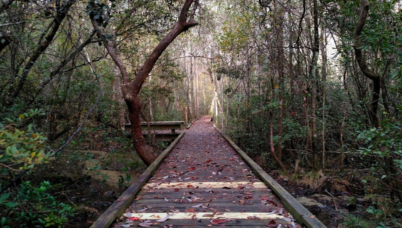 Boardwalking through Bogue Chitto State Park