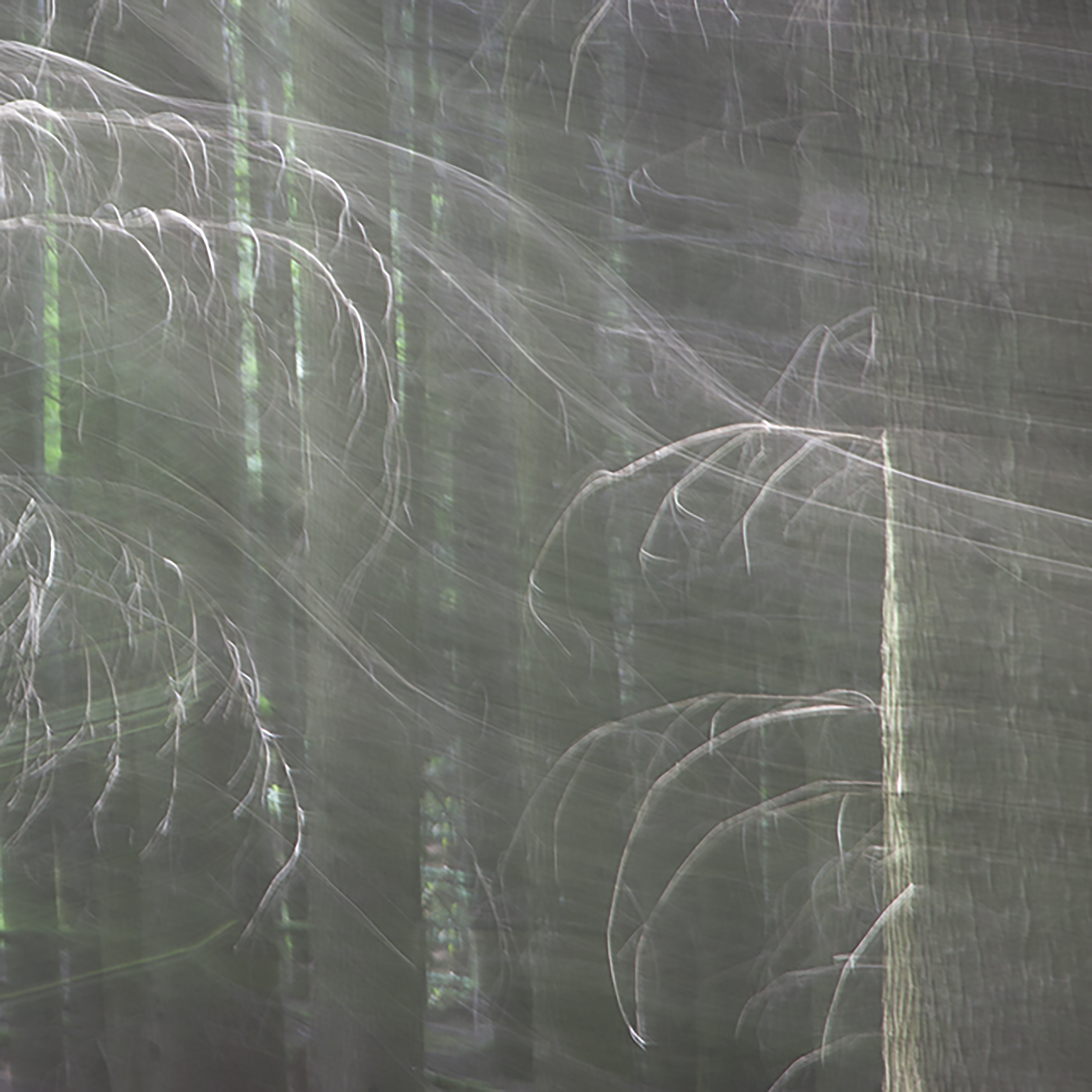 Woods Abstract 3.jpg