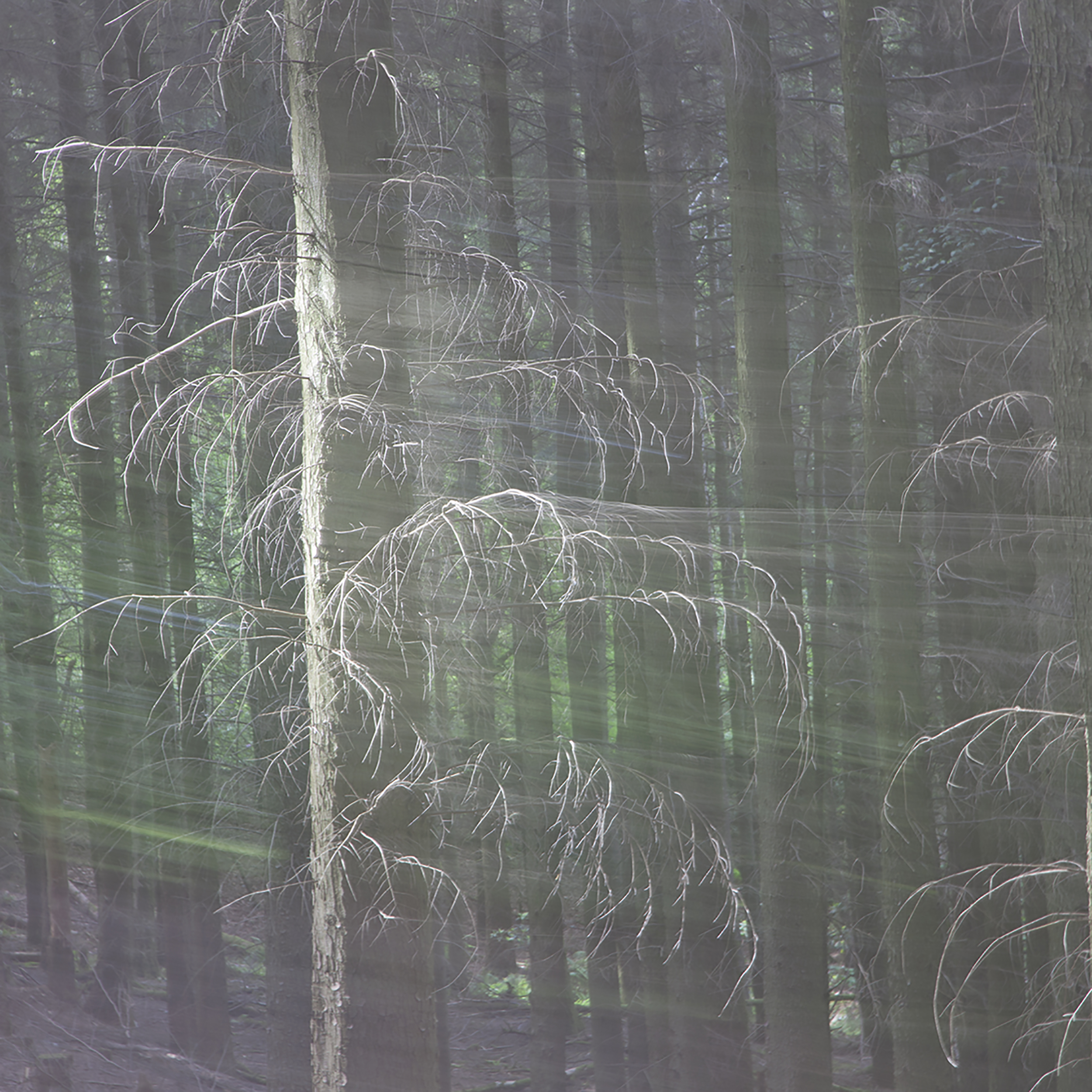 Woods Abstract 2.jpg