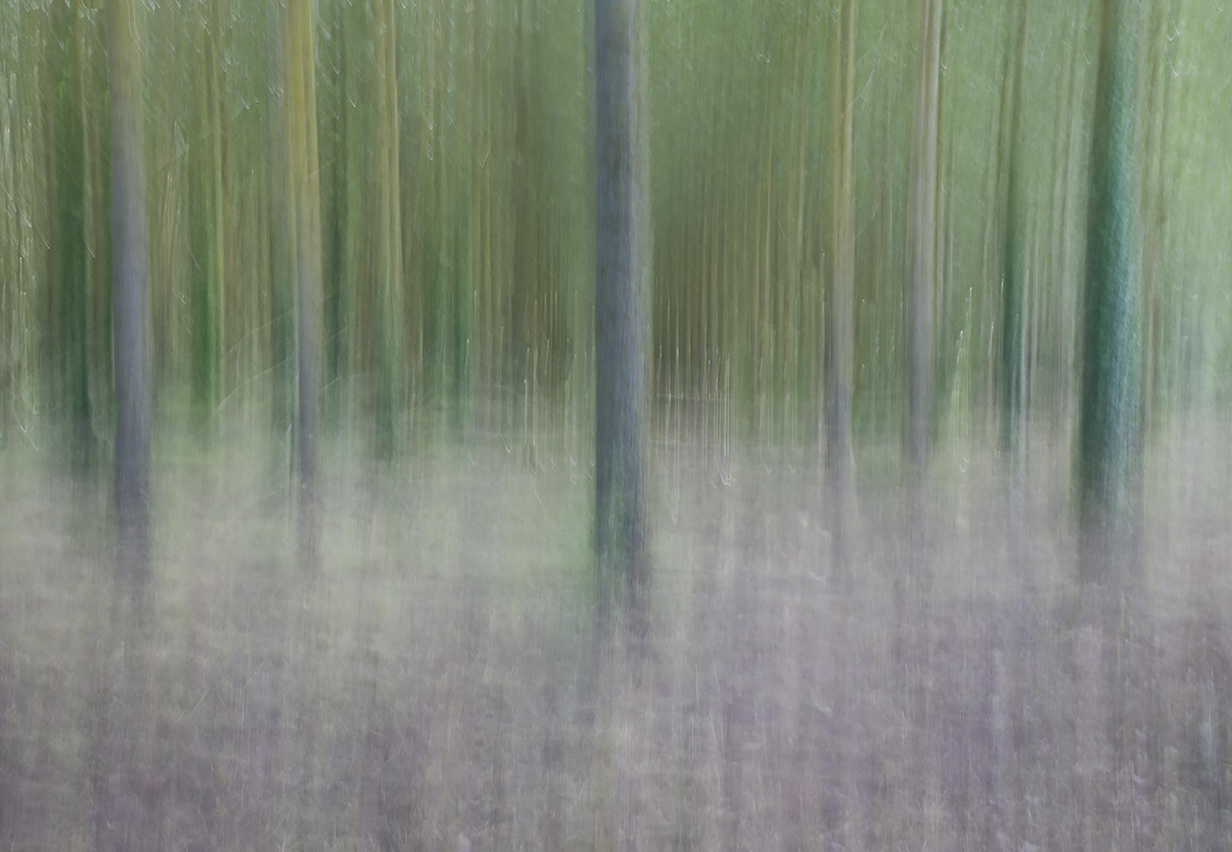 ICM Trees.jpg