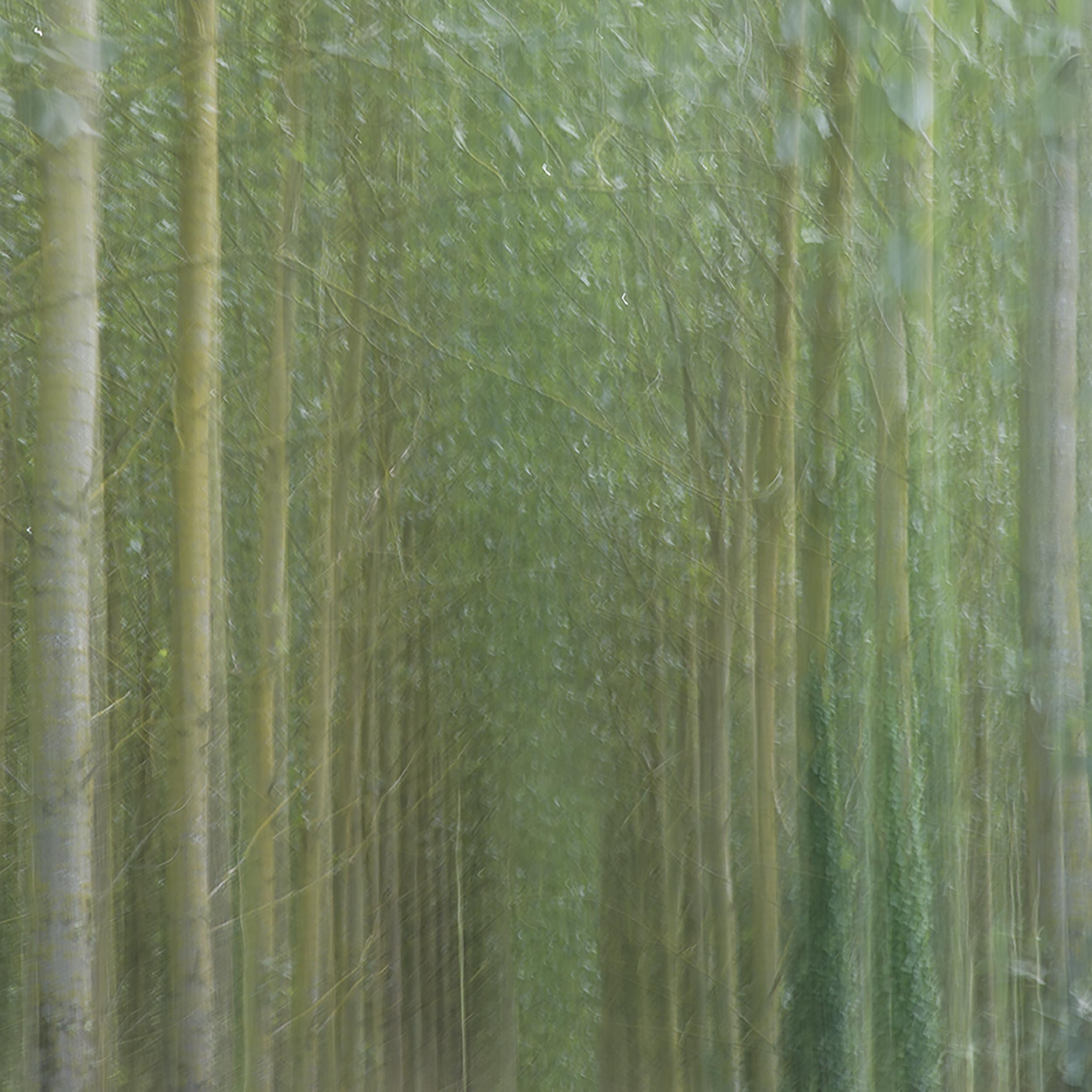 ICM Trees 3.jpg