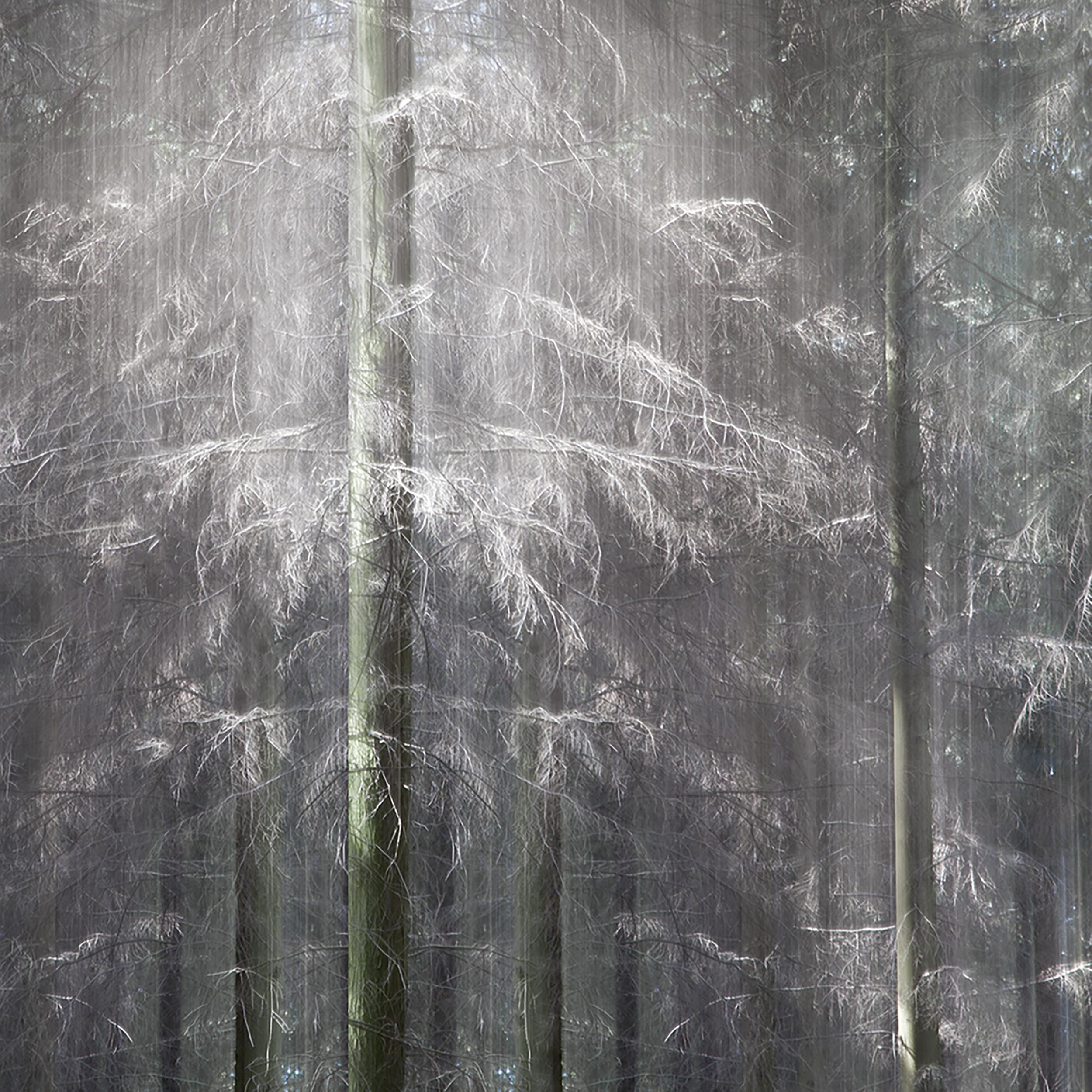 Atmospheric Woods Sq.jpg