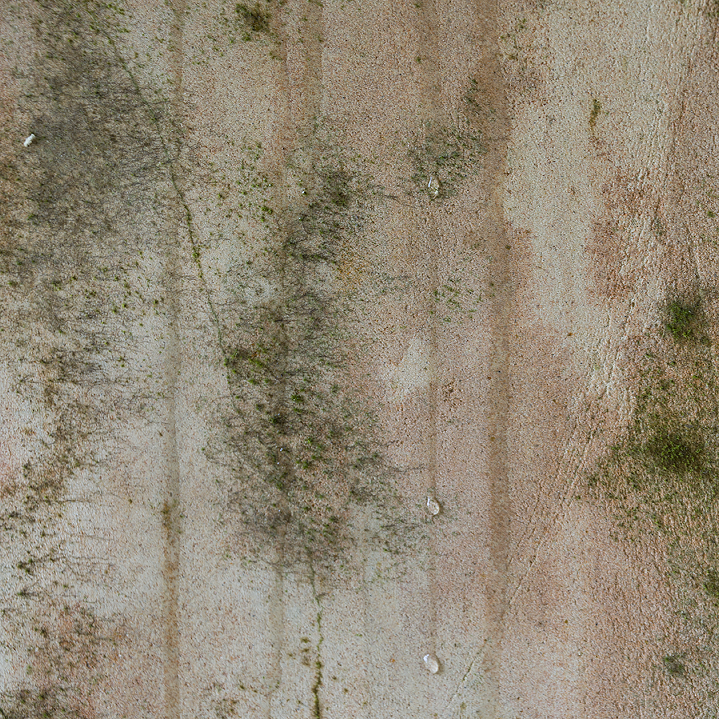 Trees in the Mould 5.jpg