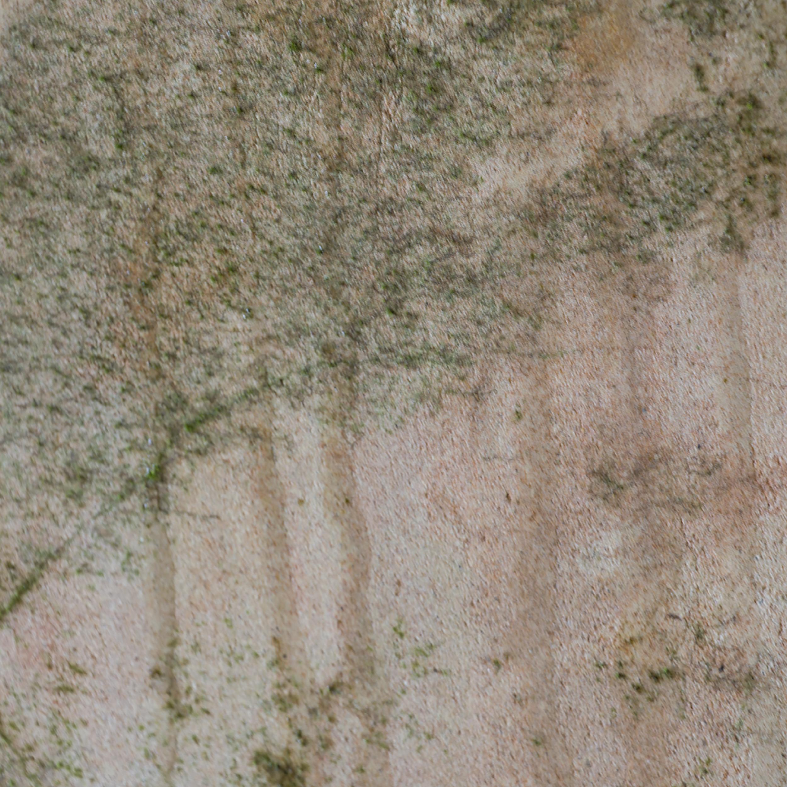 Trees in Mould 11.jpg