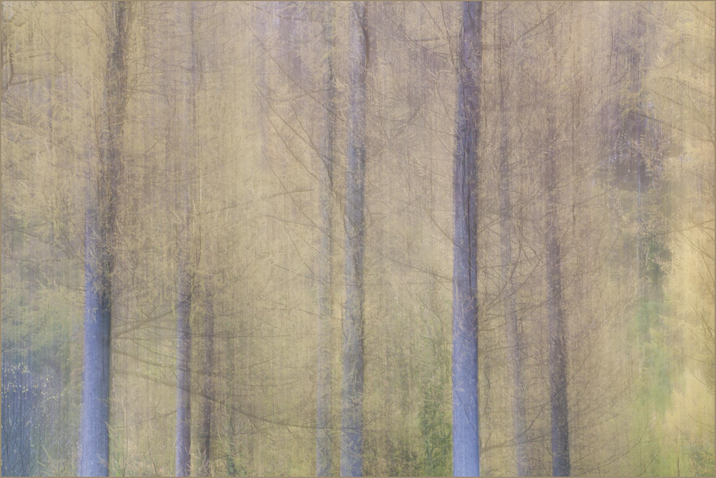 The Woods in Autumn.jpg