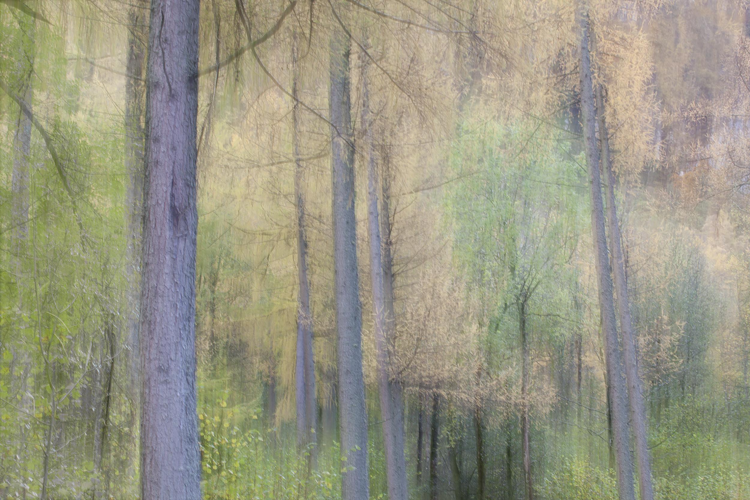 The Woods in Autumn 2.jpg