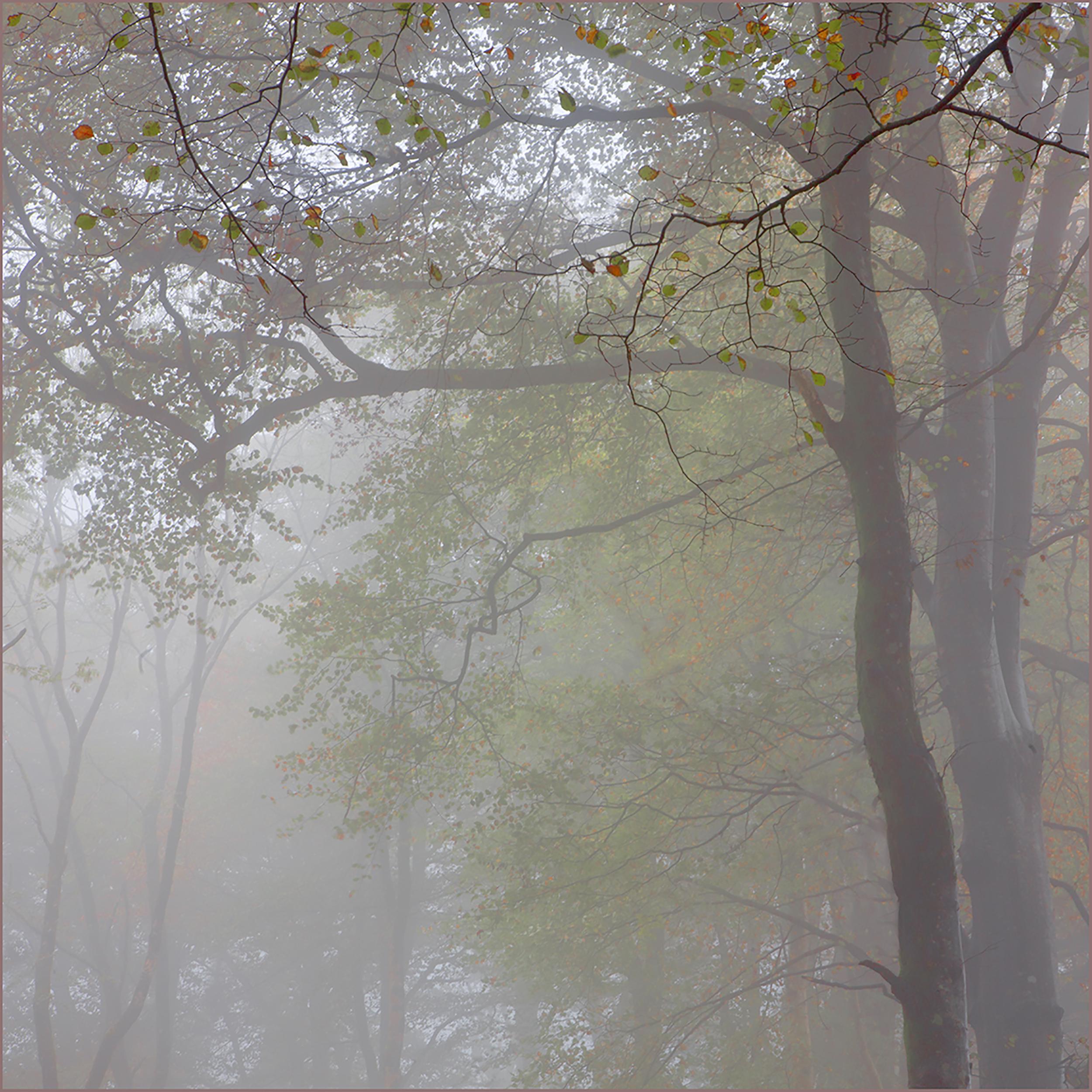 Mist at Lukesland.jpg