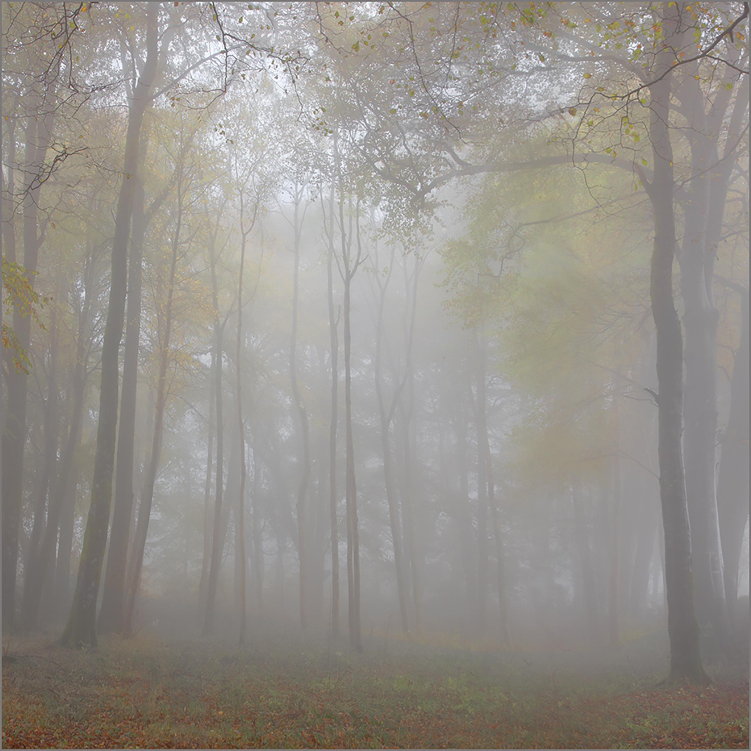 Mist among the trees.jpg