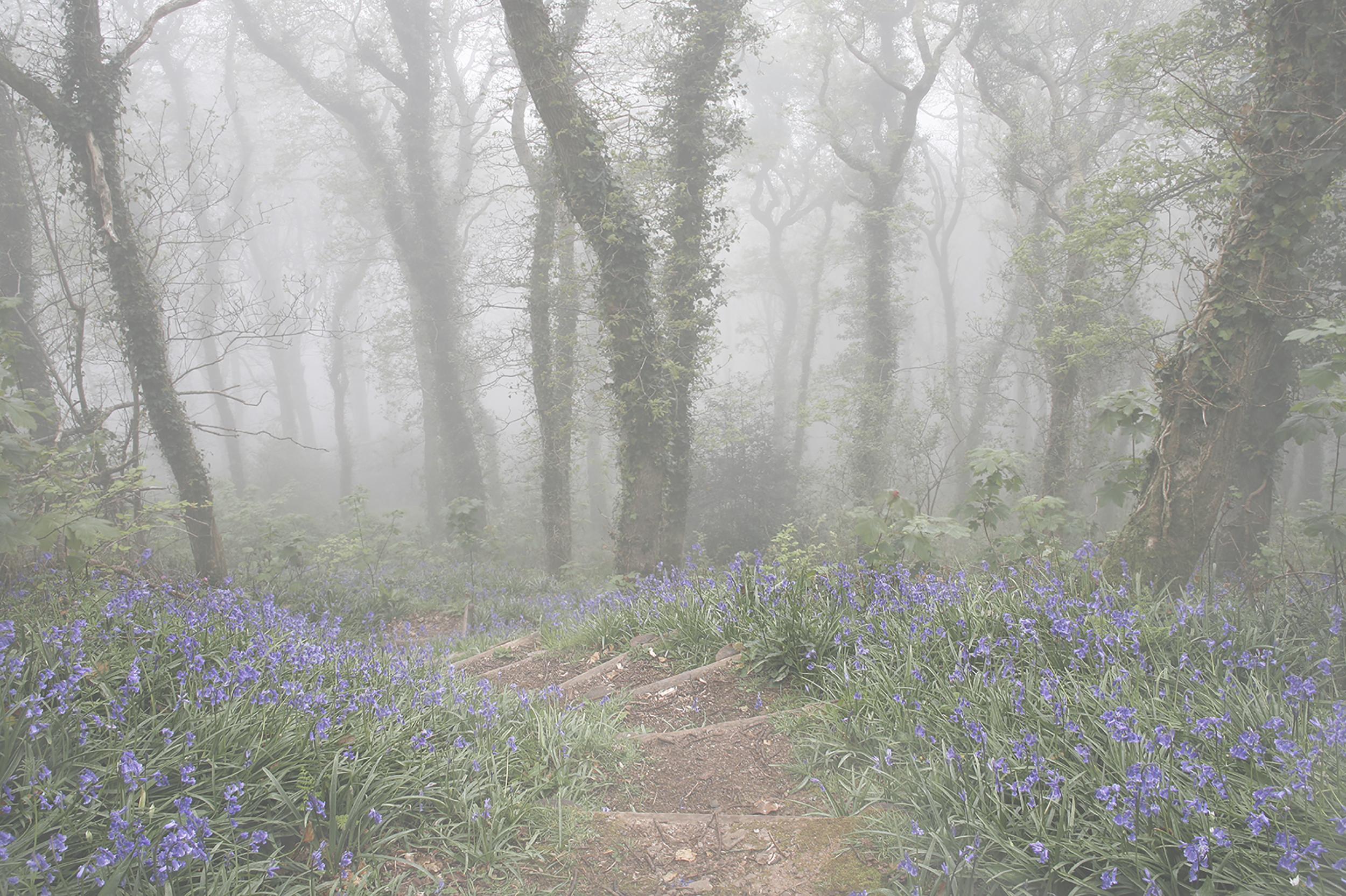Bluebells in the Misty Wood Paler.jpg