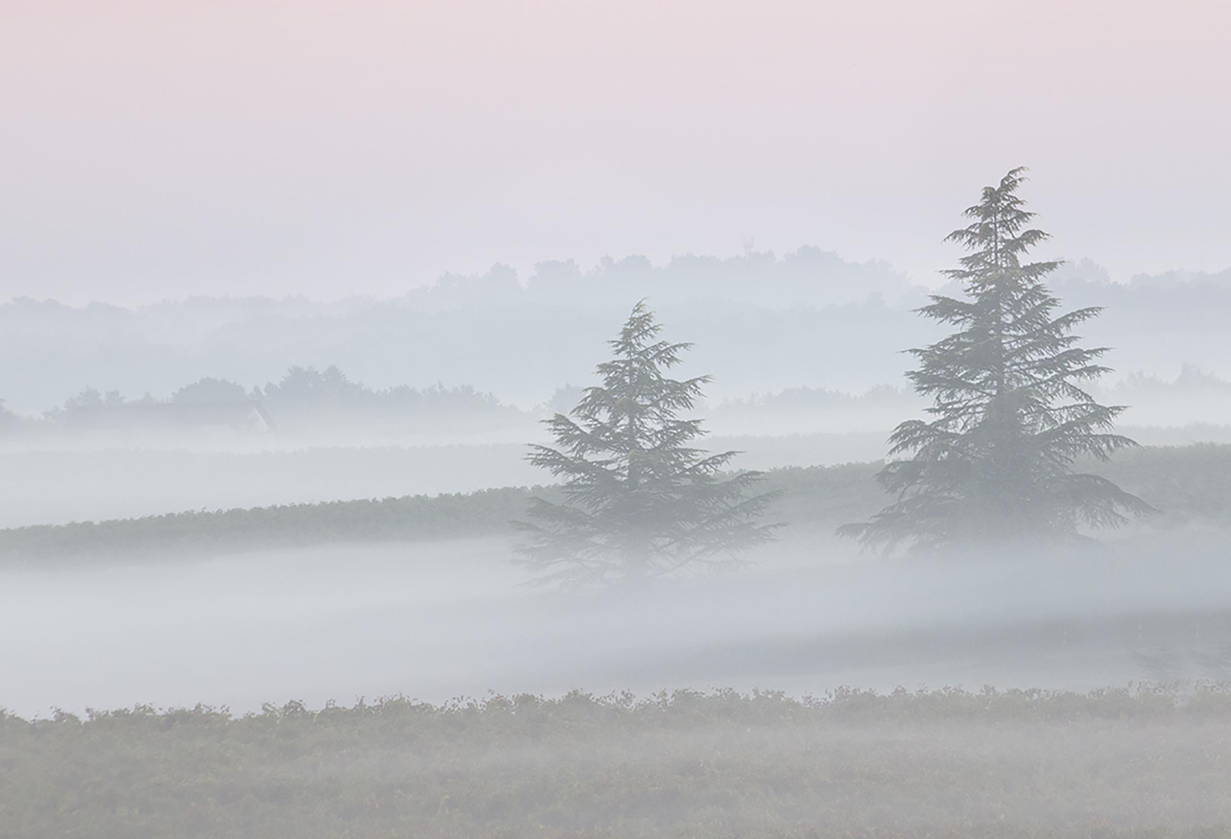 Two Trees in the Mist Landscape.jpg