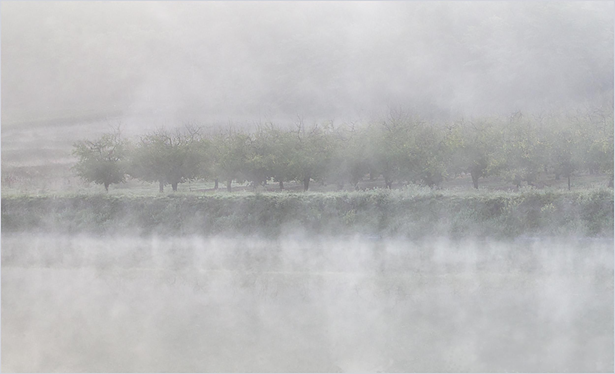 Trees in the Mist.jpg