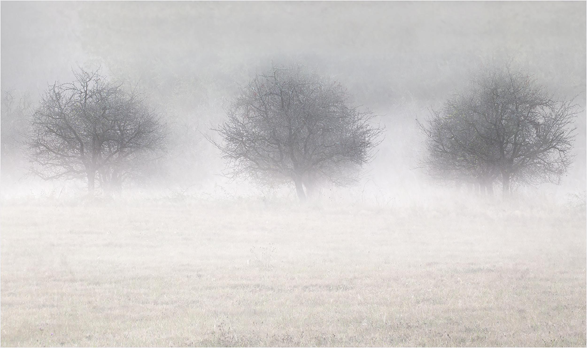 Three Trees in the Mist.jpg