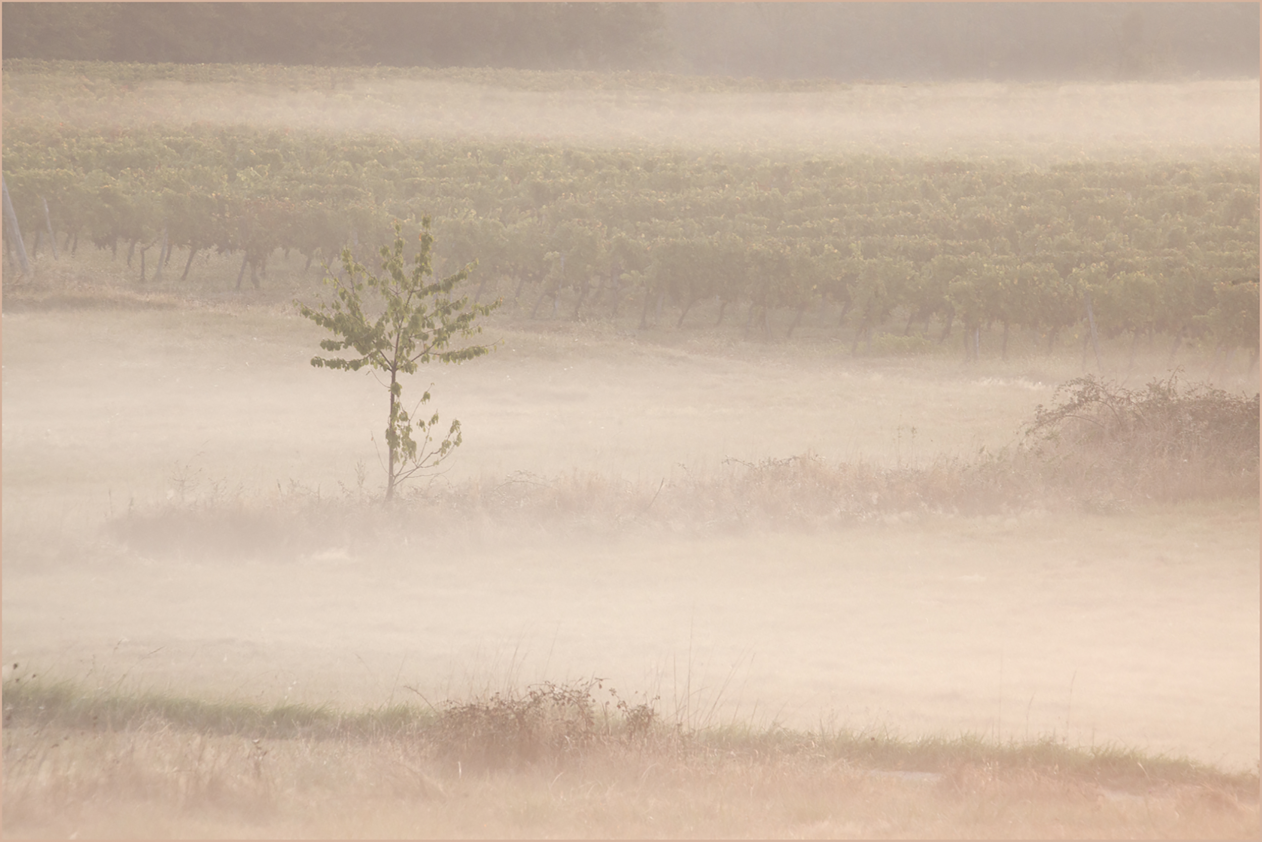 Small Tree at Dawn.jpg