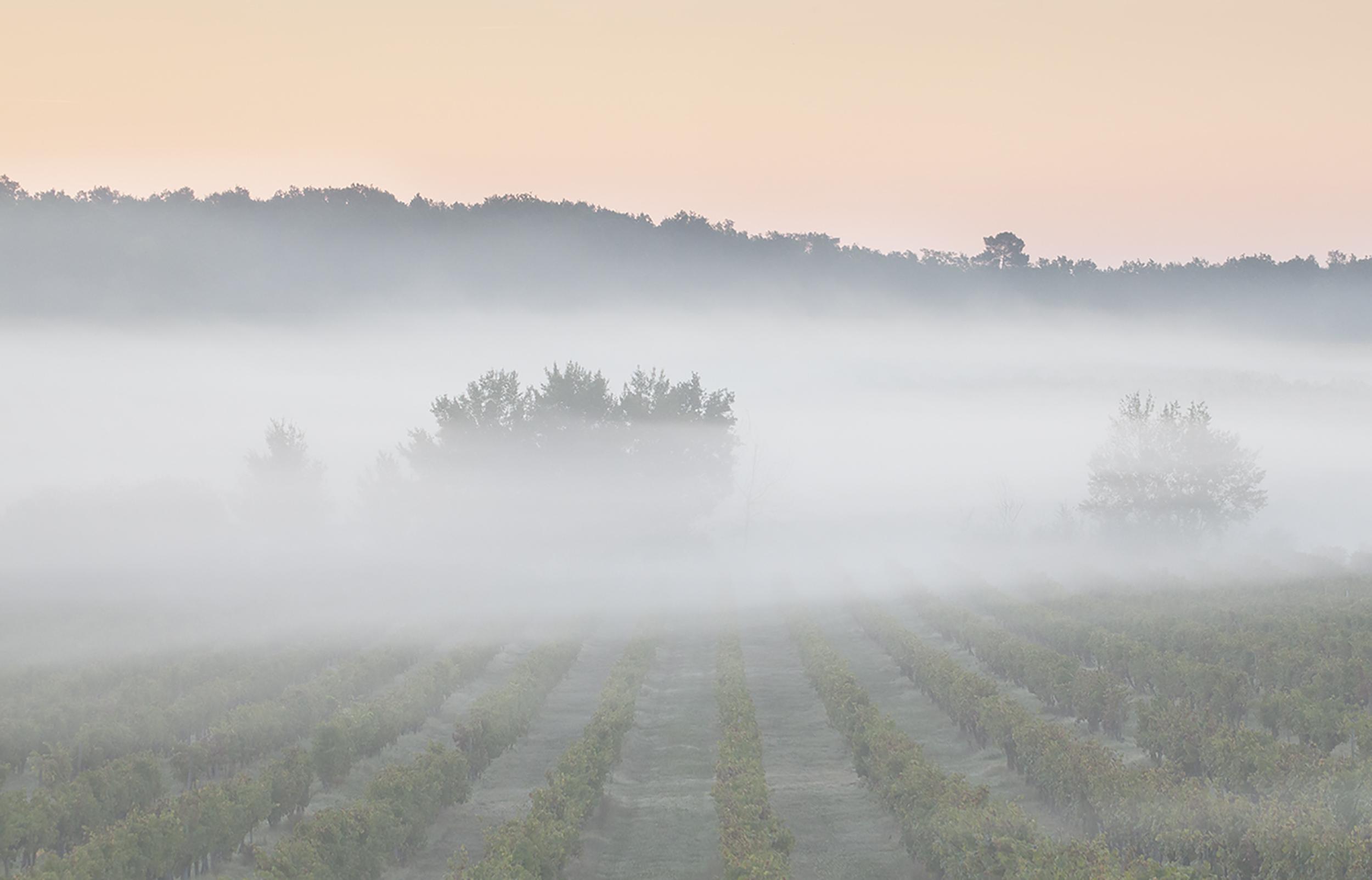 Low Lying Mist 3.jpg