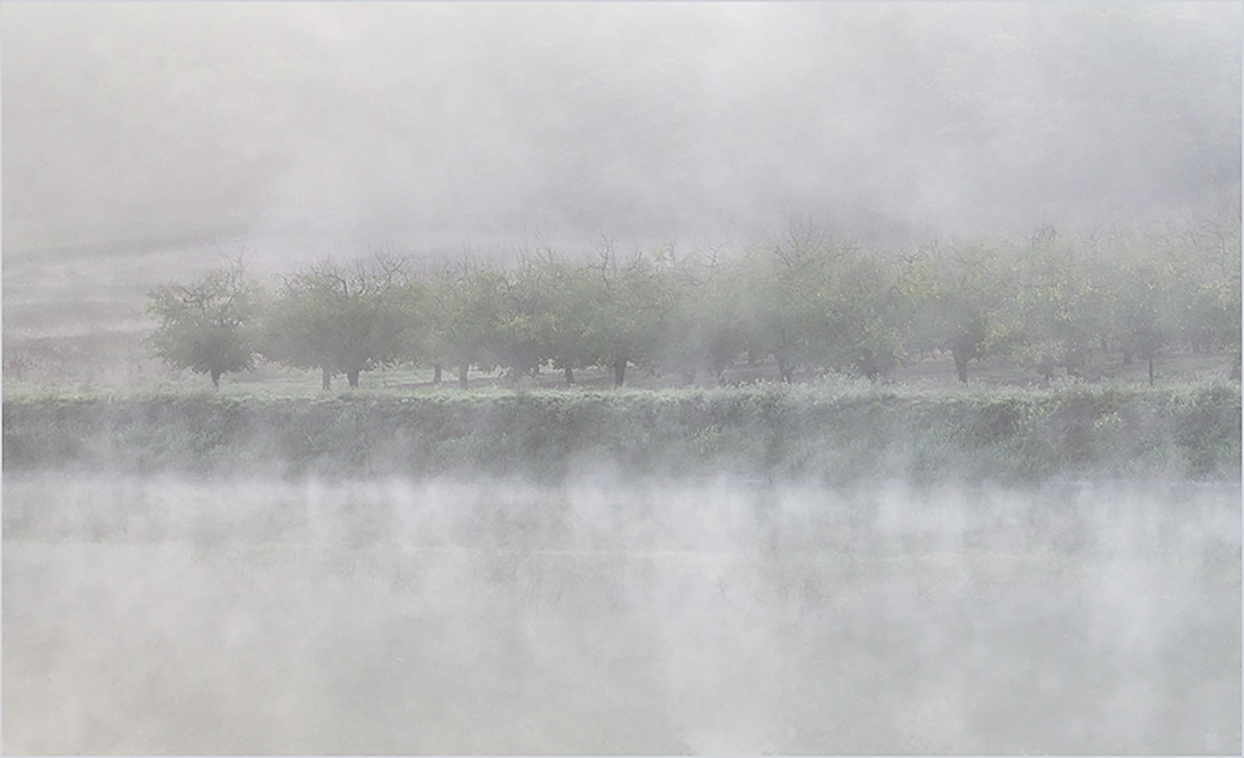 Trees in the Mist.jpg