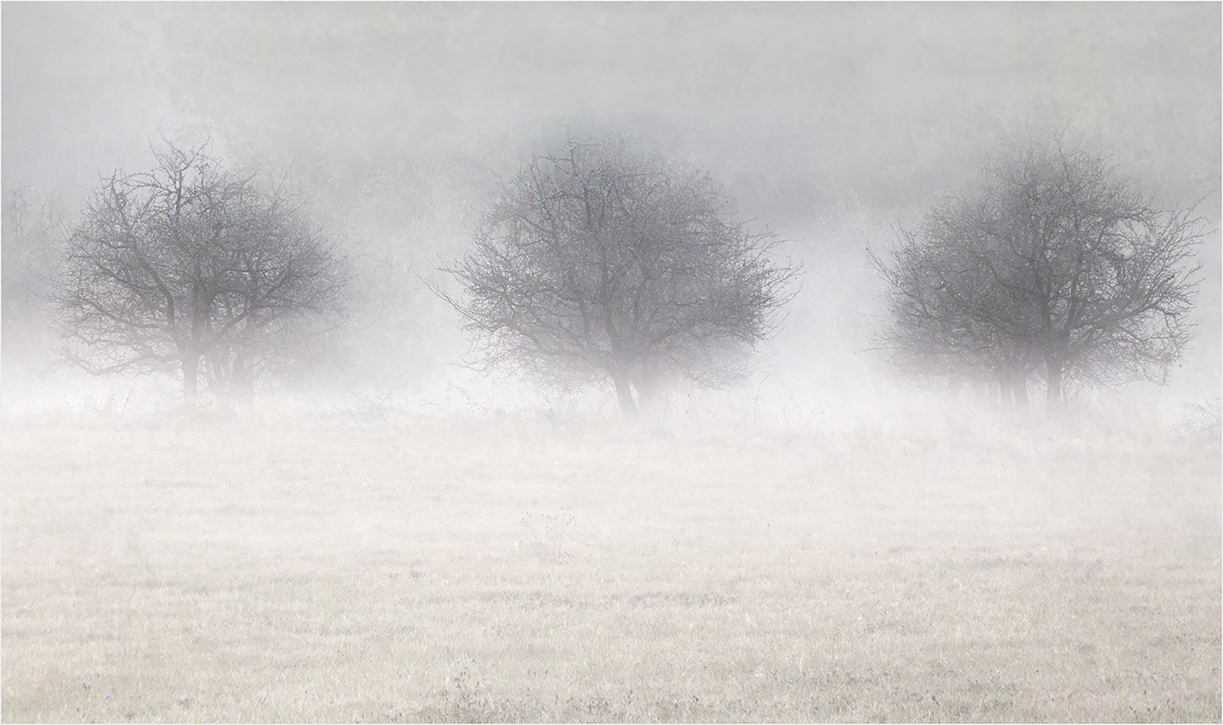 Three Trees in the Mist.jpg