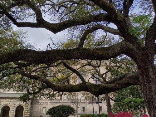 ArmstrongPark_Trees_NewOrleans.jpg