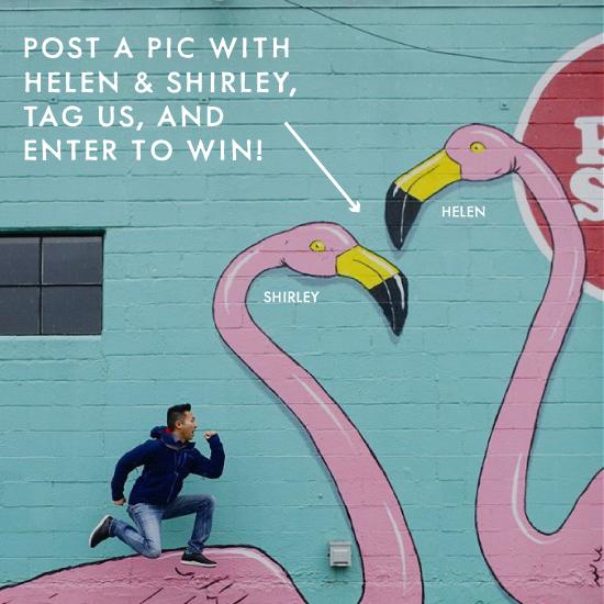 ig-flamingo-promo.png