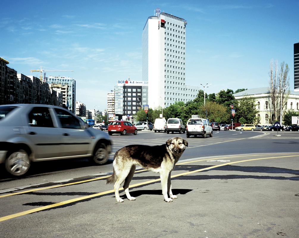 Dog-against-Traffick_2.png
