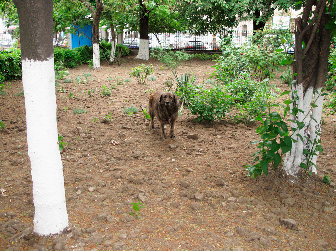 Dog-between-white-trees.png