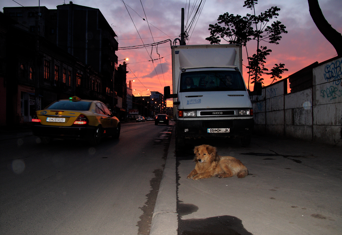 Dog-by-road-sunset.png