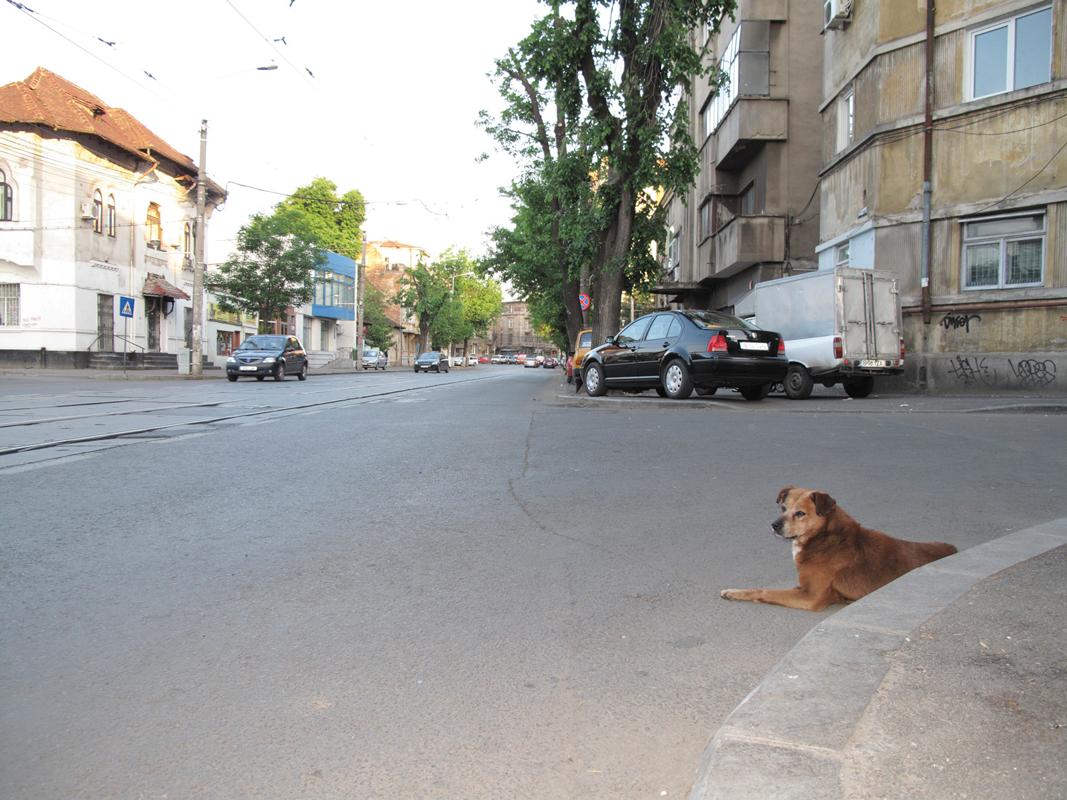 Dog-in-corner-of-road-3.png