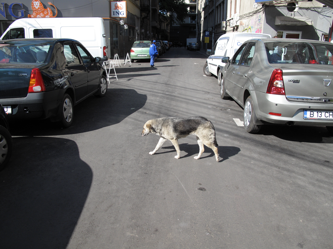 Dog-crossing-road.png