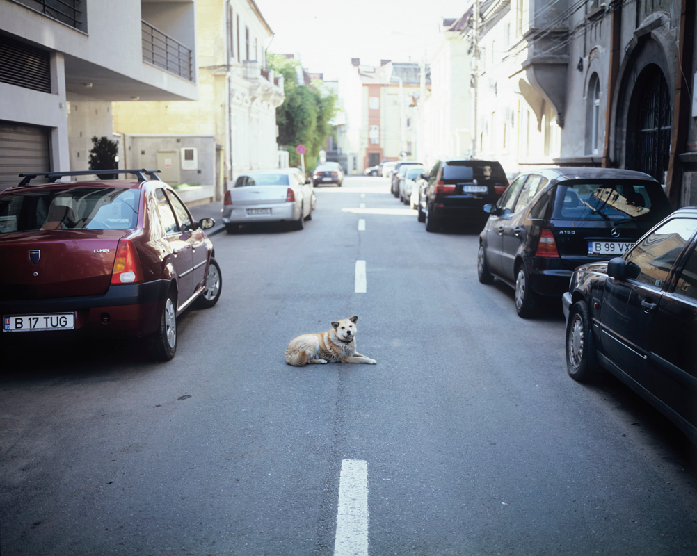 Dog-Lying-in-Middle-of-Road.png