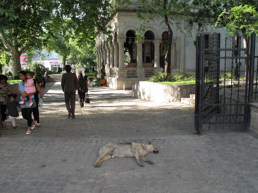 Dog-sleeping-by-a-church.png