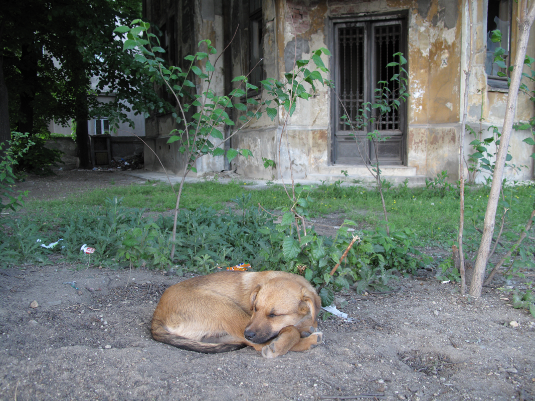 Dog-sleeping-by-derelict-building.png