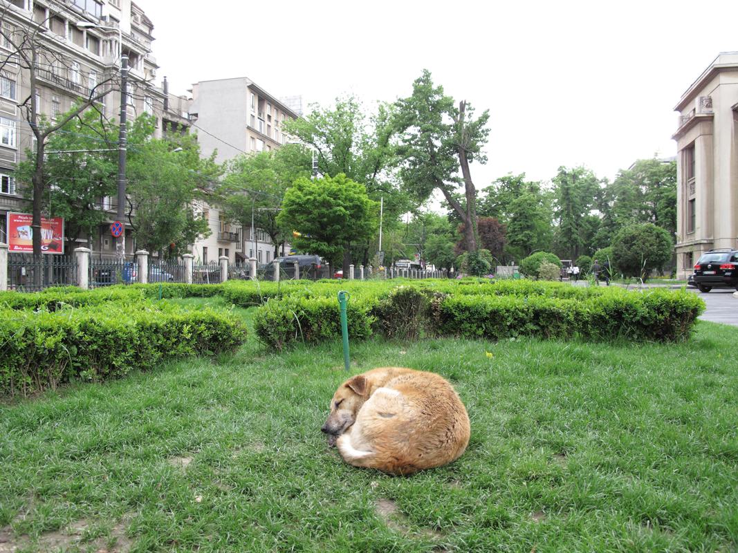 Dog-sleeping-at-university.png
