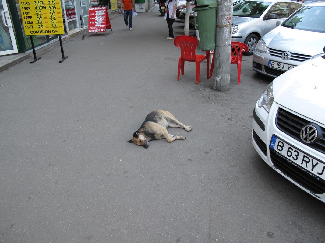 Dog-sleeping-on-pavement.png