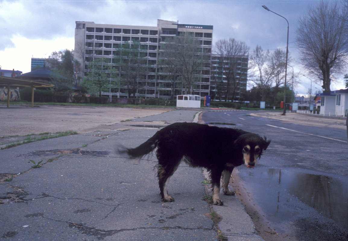 Stray-dog-1.png