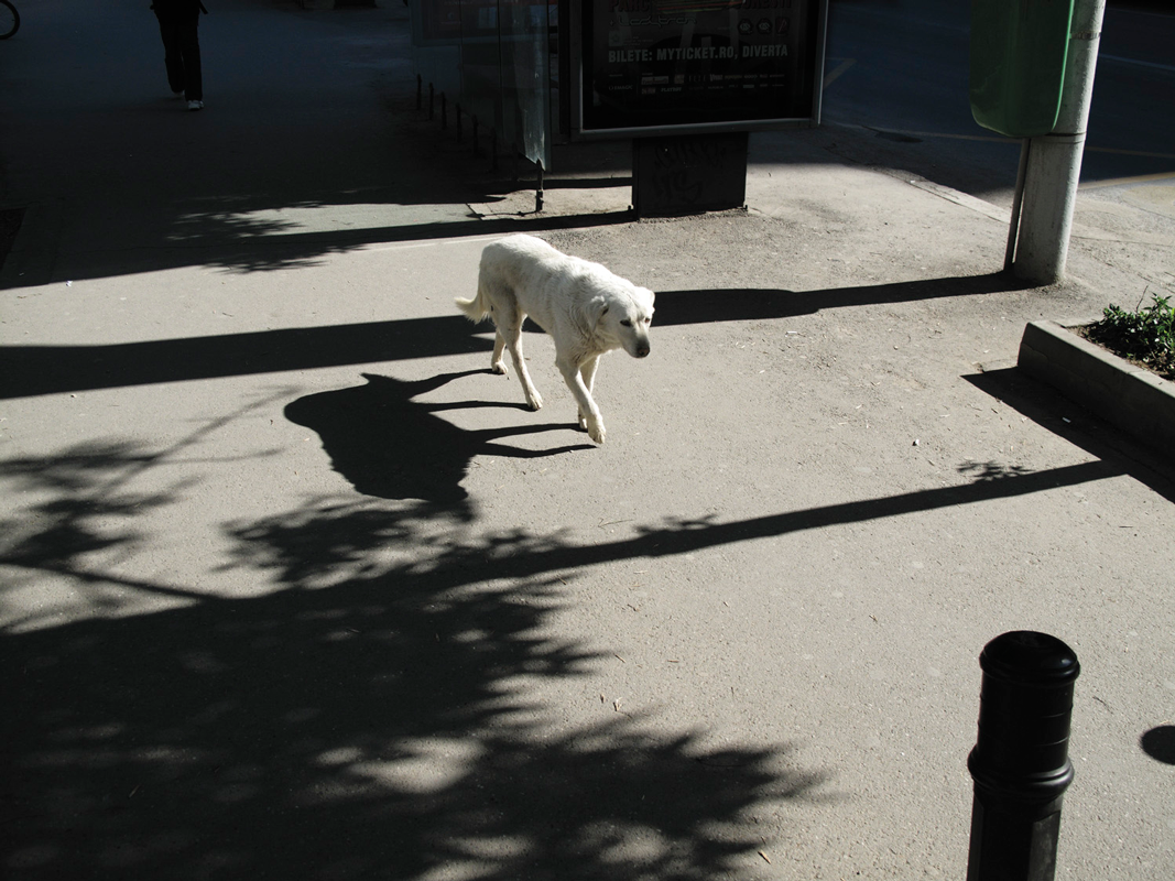 White-dog-with-shadow.png