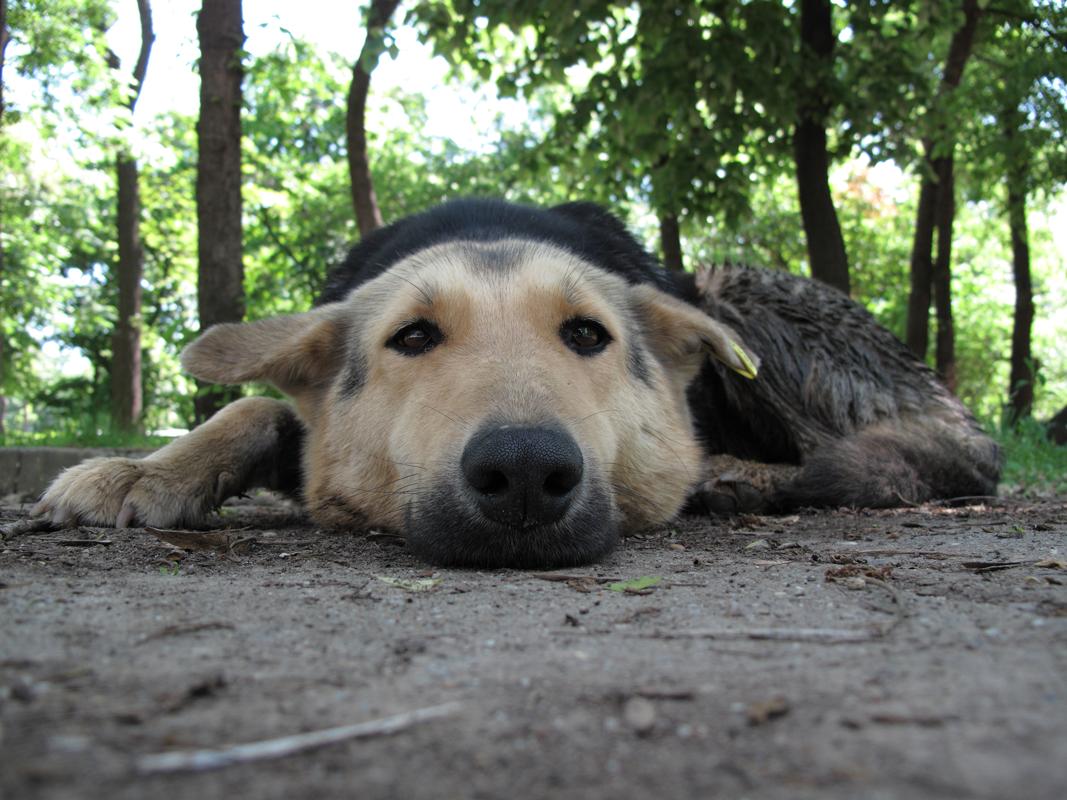 Sleeping-dog-awakes-CU.png