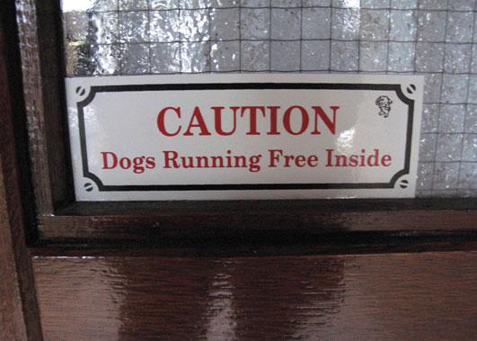 dogs-running-free.jpg