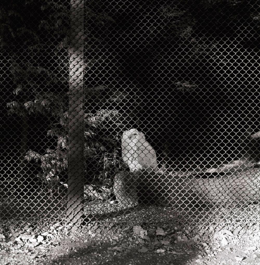Samsara (Owl)