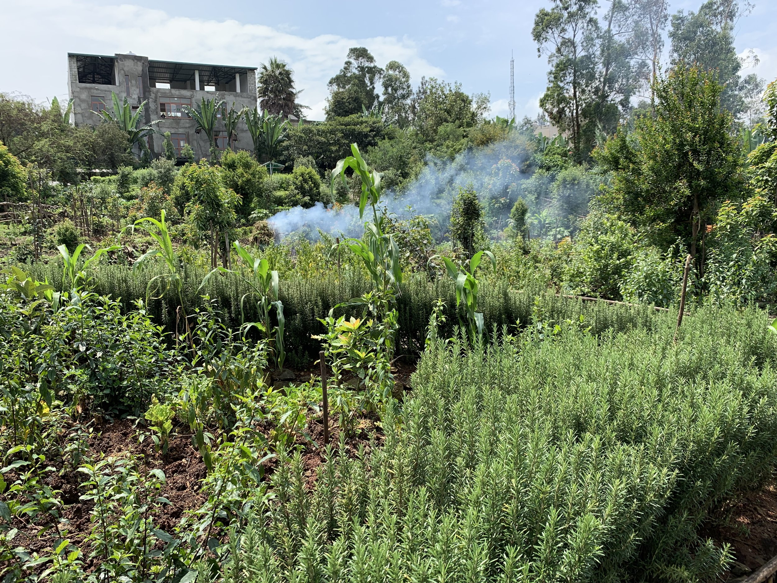 The gardens at Zoma on a reclaimed area. Natural beauty in every direction.