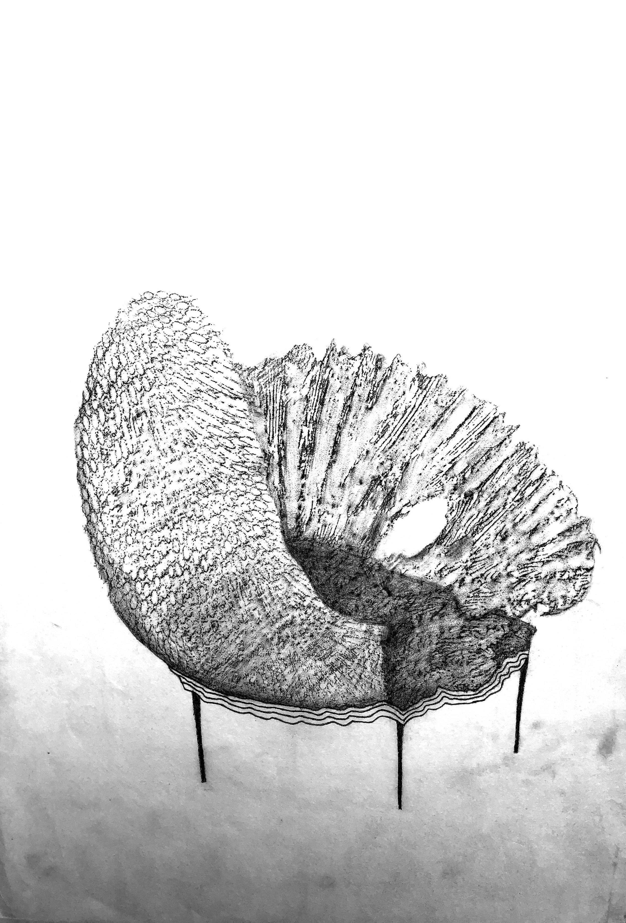 Clam chair. Charcol and pencil on rice paper. 26x37cm