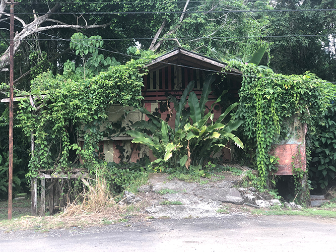 Puerto Viejo de Talamanca, Costa Rica.  wedelh@gmail.com  https://www.facebook.com/ChrisWedelH/   https://www.instagram.com/chris_wedel/