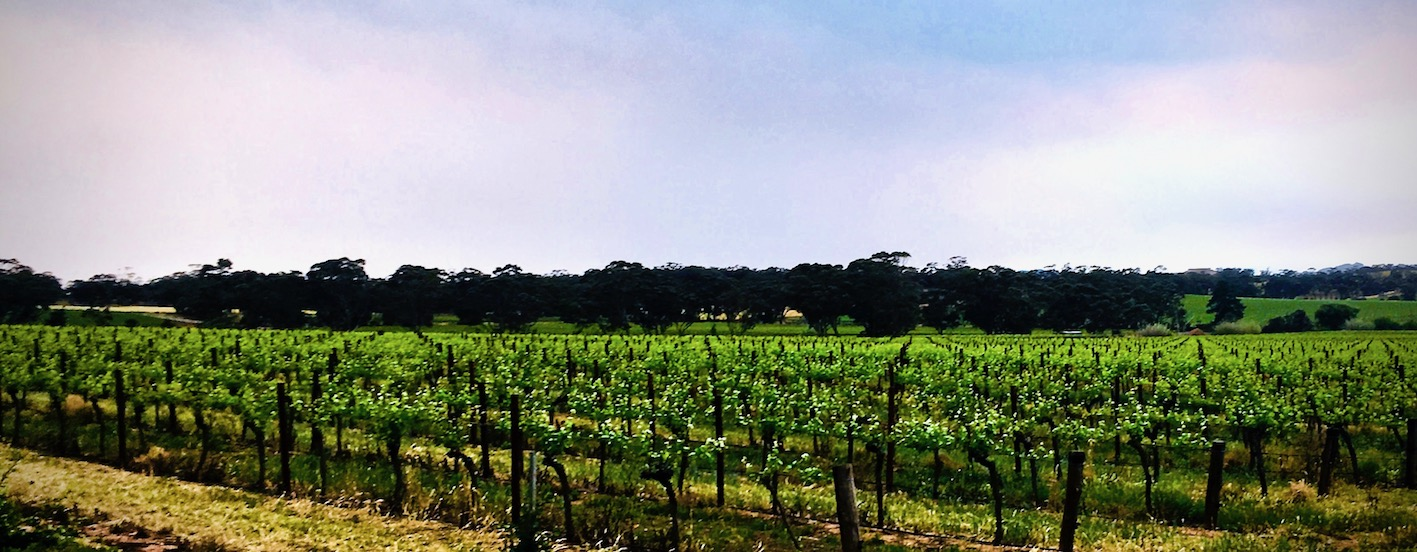 Massena - Australia • Barossa Valley